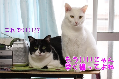 IMG_0536編集②.jpg