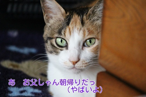 IMG_0777編集②.jpg