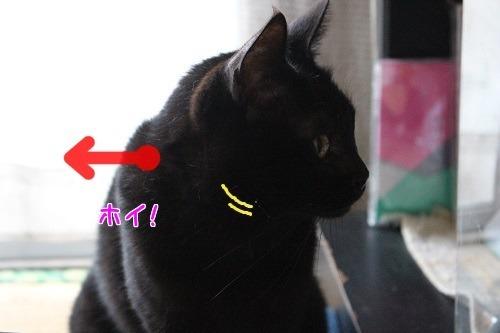 IMG_2116編集②.jpg