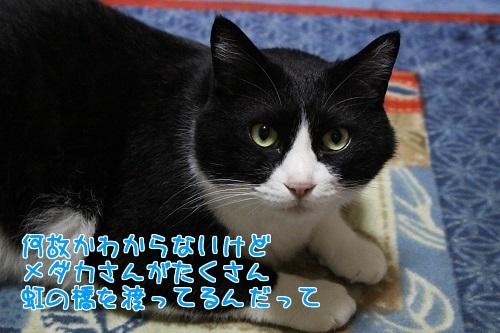 IMG_2661編集②.jpg