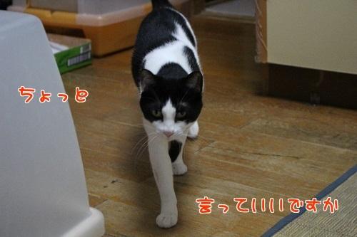IMG_2814編集②.jpg