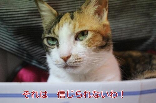 IMG_4559編集②.jpg