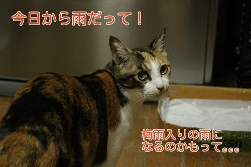 IMG_5604編集②.jpg