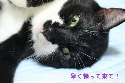 IMG_6110編集②.jpg