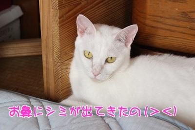 IMG_6205編集②.jpg