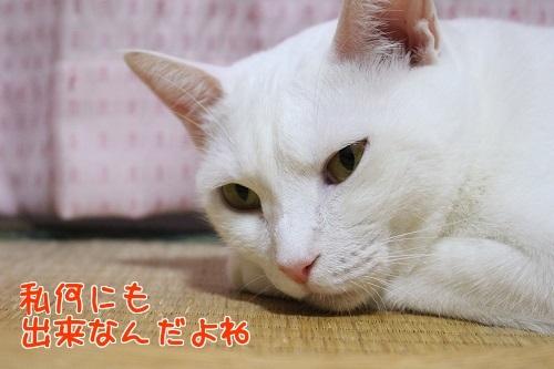 IMG_8122編集②.jpg