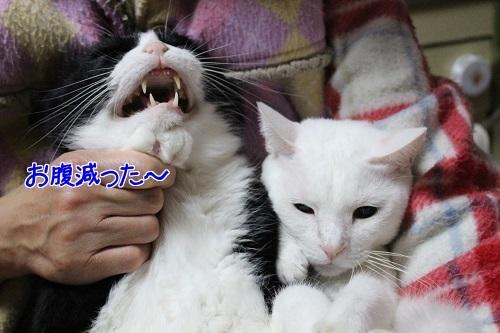IMG_9575編集②.jpg