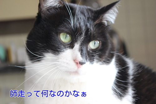 IMG_9752編集②.jpg