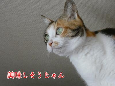 P1050234編集②.jpg