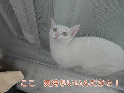 P1060165編集②.jpg
