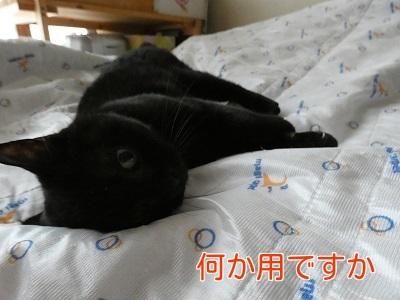 P1060321編集②.jpg