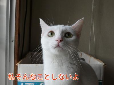 P1070094編集.jpg
