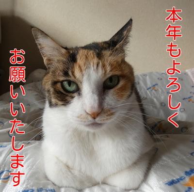 P1080468編集②.jpg
