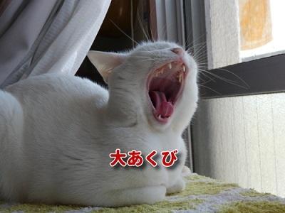 P1100170編集②-1.jpg
