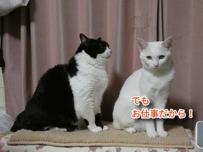 P1110101編集②.jpg