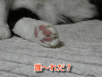 P1110221編集②.jpg