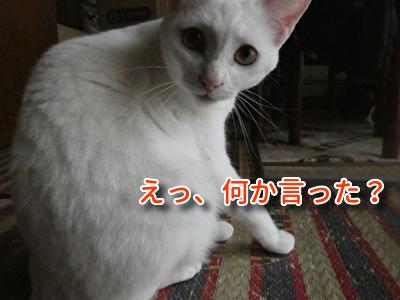 P1110291編集②.jpg
