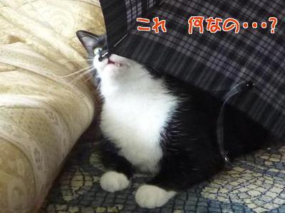 P1220234編集②.jpg