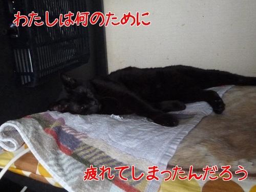 P1430257編集②.jpg