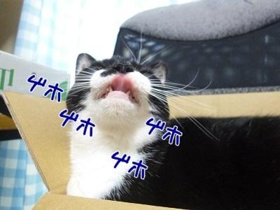 P1510930編集②.jpg