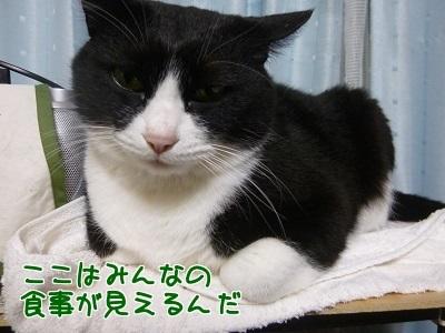 P1520600編集②.jpg