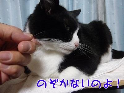 P1520601編集②.jpg