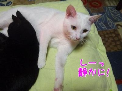 P1530049編集②.jpg
