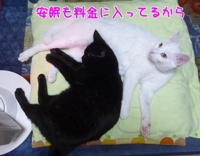 P1530054編集②.jpg