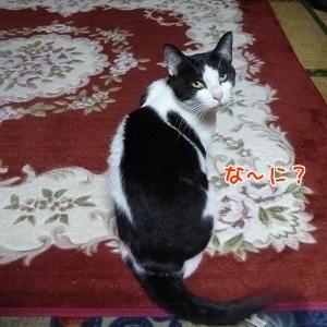 P1530275編集②.jpg