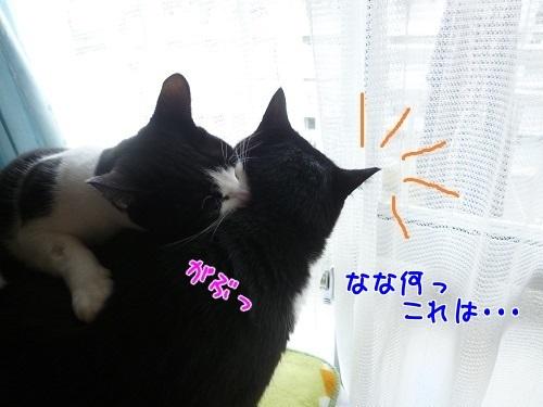 P1530621編集②.jpg