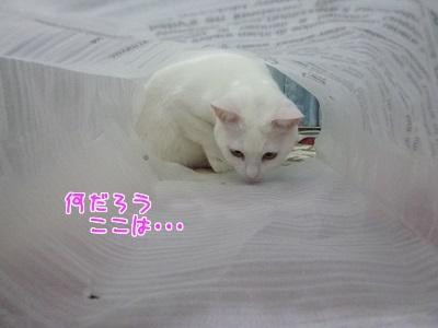 P1530943編集②.jpg