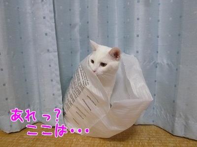 P1530990編集②.jpg