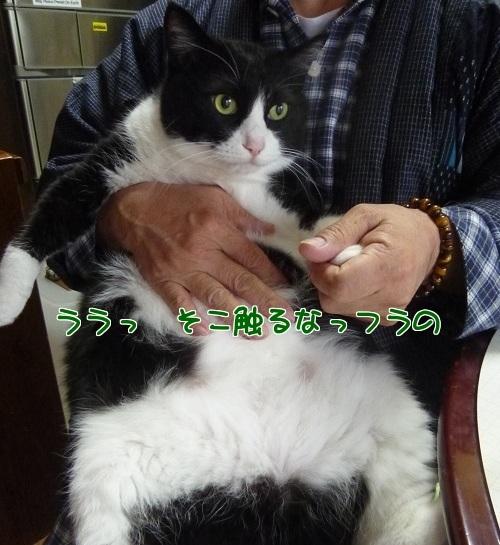 P1540417編集②.jpg