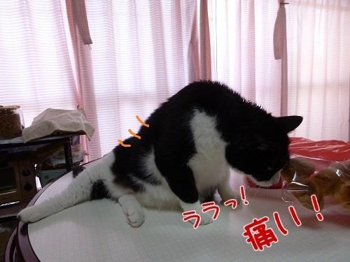 P1580464編集②-1.jpg
