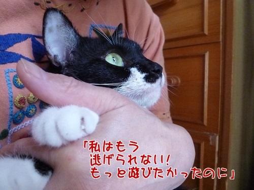 P1590300編集②.jpg