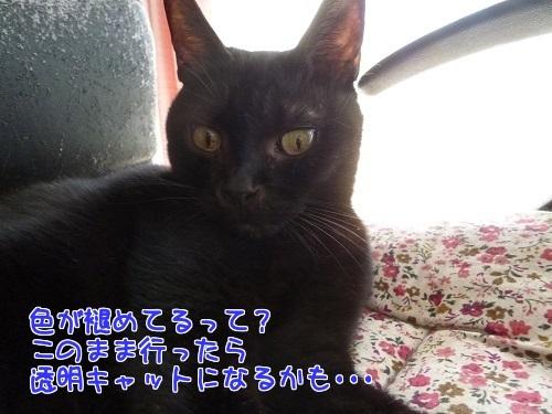 P1590930編集②.jpg