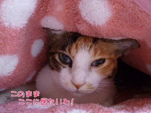 P1600466編集②.jpg