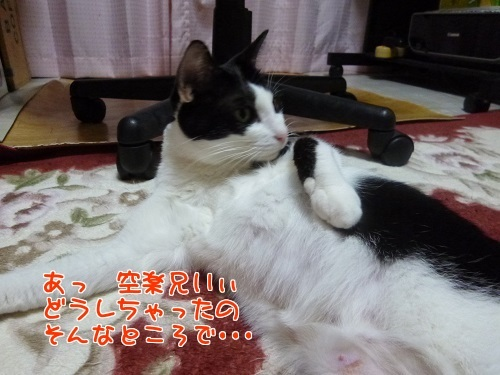 P1610263編集②.jpg