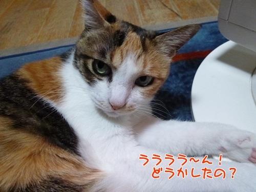 P1750202編集②.jpg
