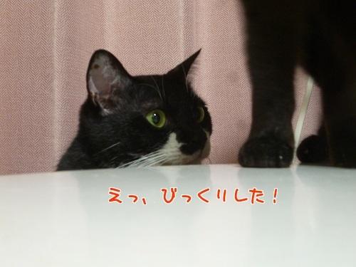 P1780225編集②.jpg