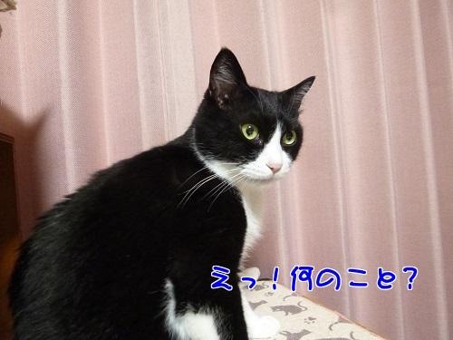 P1780684編集②.jpg
