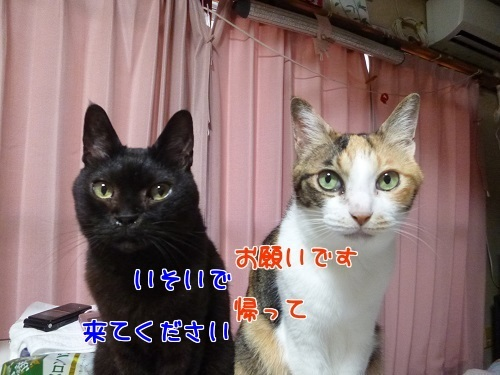 P1790325編集②.jpg