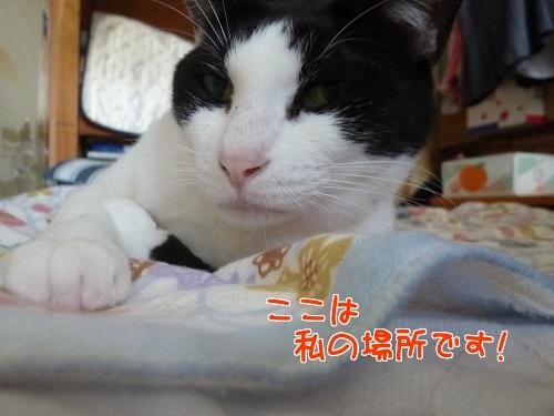 P1790751編集②.jpg