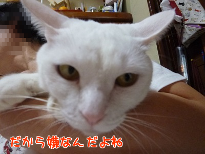 P1800471編集②-1.png